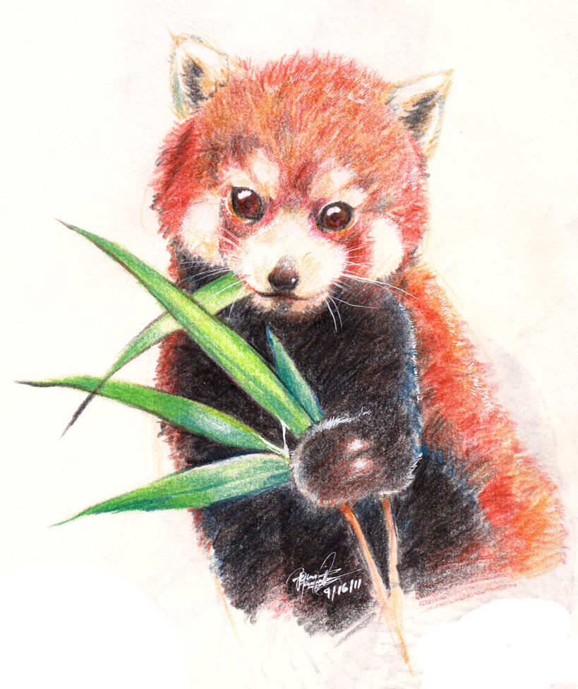 how to draw cute red pandas