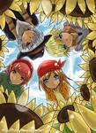 HM Sunshine Isl:Summer Shine