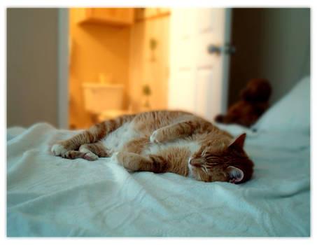 Sleep-Is-Everything