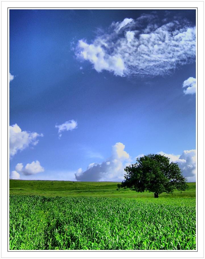 Tree2 by kTzcata