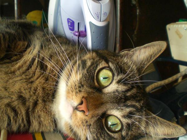 my_cat1_by_FatmaxArt.jpg