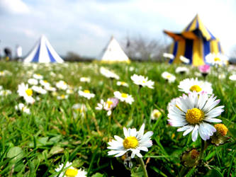 Daisy carnival by Ideas-in-the-sky