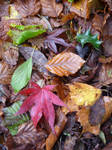 A touch of autumn
