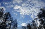 Pining Sky