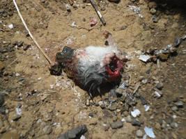 Half-Dead Mouse Inlook