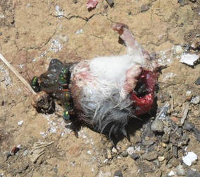 Half-Dead Mouse BrightCrop by Archie-Ratsworth