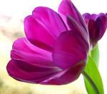 .:Purple III:. by VictorianPrincess