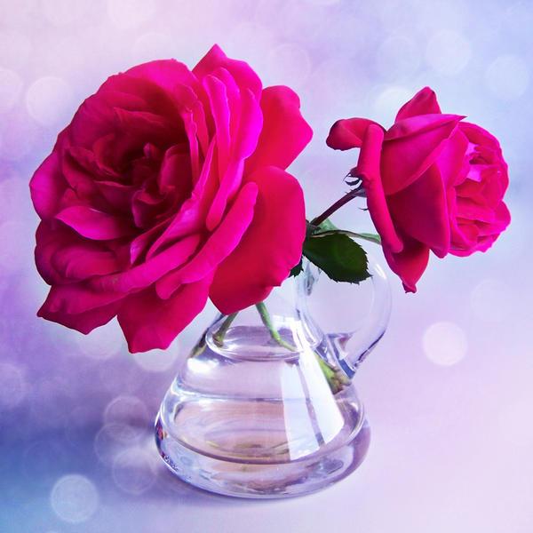 .: Magic Rose :. by VictorianPrincess