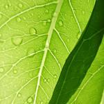 .: Under my green umbrella :. by VictorianPrincess