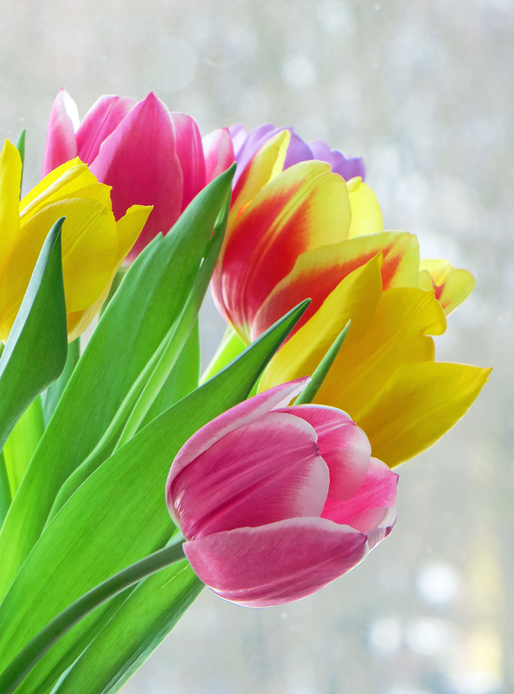 .: Colorful Spring :. by VictorianPrincess