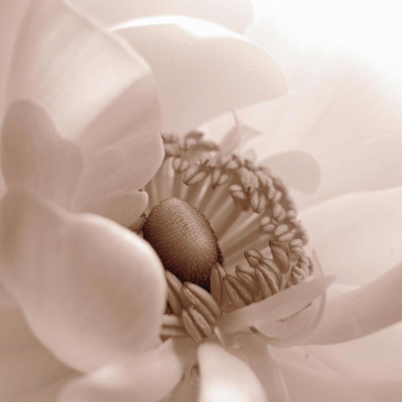 .: Soft as silk :. by VictorianPrincess