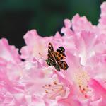 .: Flower Fairy :. by VictorianPrincess