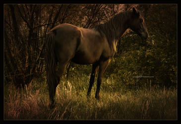 Oh Solitude.. by jaenalee