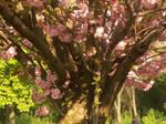 Donaupark tree