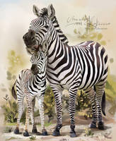 Two zebras by Kajenna