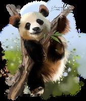 Panda by Kajenna