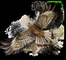 Falcon in flight by Kajenna