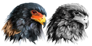 Eagle-buffoon Predator Bird