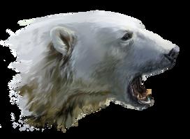 A polar bear growls