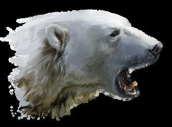 A polar bear growls by Kajenna