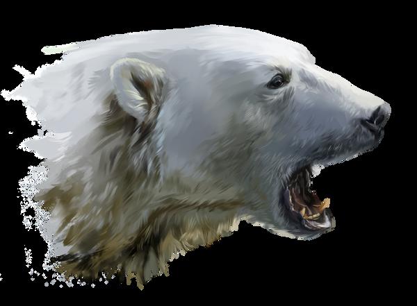 a polar bear growls by kajenna on deviantart