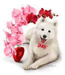 Japanese Spitz and a bouquet of flowers