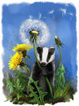 Baby badger and dandelions