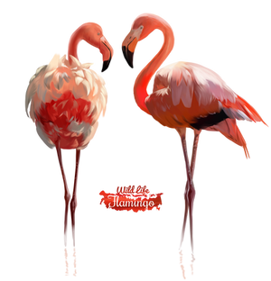 Pink Flamingo watercolor illustration