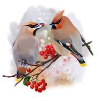 The Waxwing watercolor painting by Kajenna