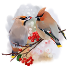 The Waxwing watercolor painting