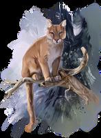 The Puma by Kajenna