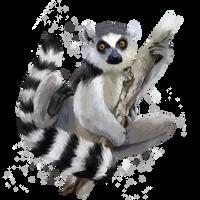 A ring-tailed lemur by Kajenna