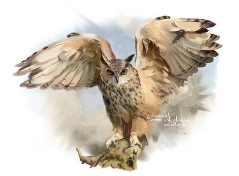 Long-eared owl by Kajenna