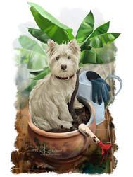 Hello, I'm your new gardener