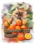My best oranges