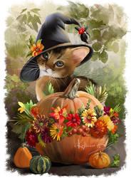 Kitten Uki and pumpkins