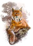 The Eurasian Lynx