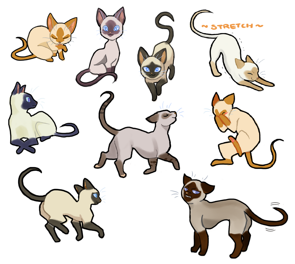 Cats 101 Siamese by Fruichie on DeviantArt