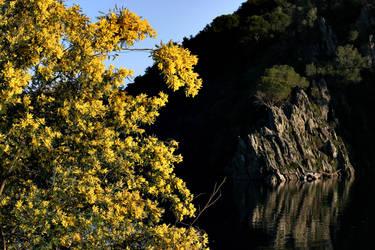 yellow on the rocks by peitxon