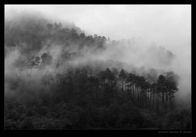 fog by peitxon
