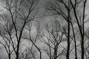 Trees by SmellsLikeDookie