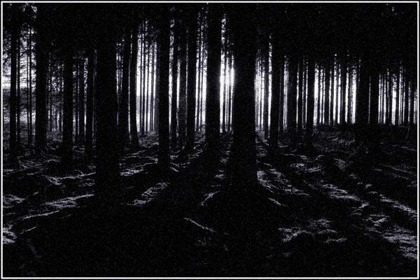 dark_forest_by_noobs.jpg