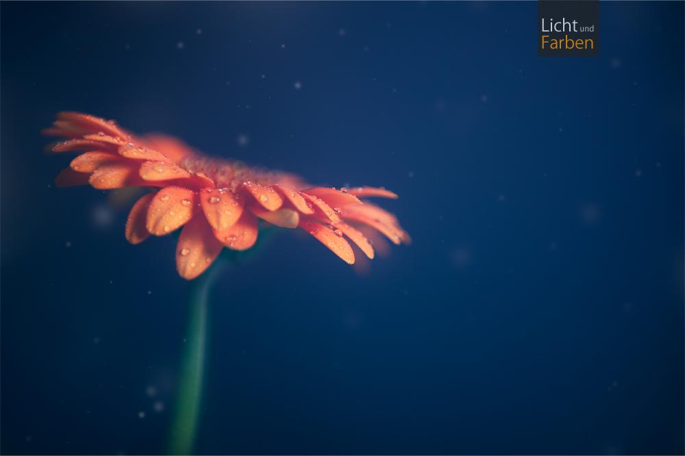 Orange beauty by Neji55
