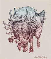 Bull Conch by KatePfeilschiefter