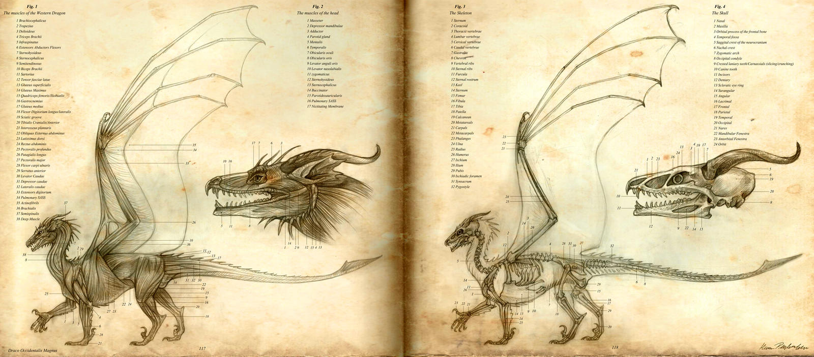 Anatomy of the Western Dragon