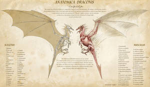 Anatomica Draconis by KatePfeilschiefter