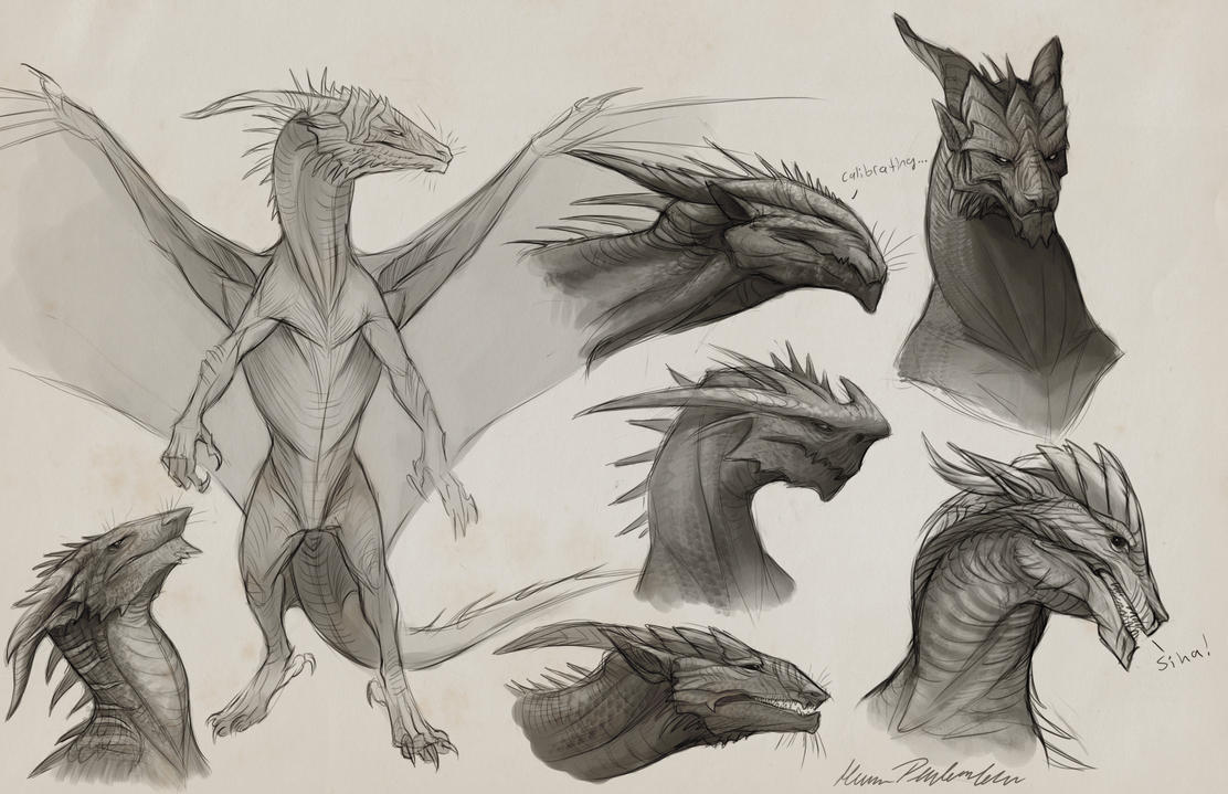 Sapient Dragon Sketches By KatePfeilschiefter On DeviantArt