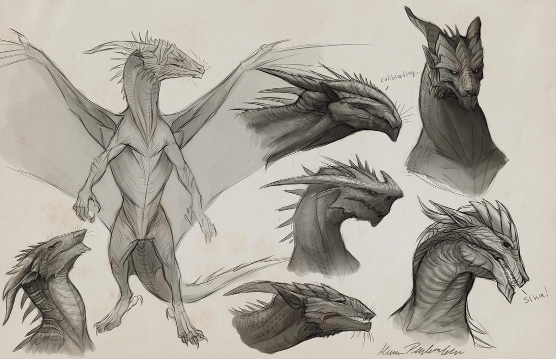 Sapient Dragon Sketches By KatePfeilschiefter On DeviantArt