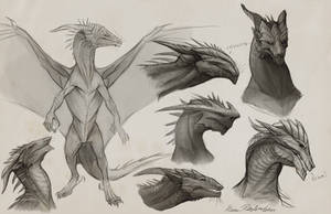 Sapient Dragon Sketches by KatePfeilschiefter