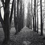 Path by dosske